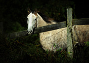 Metaphor Acrylic Prints - If Wishes Were Horses Acrylic Print by Rebecca Sherman