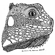 Face Drawings - Iguana by Karl Addison
