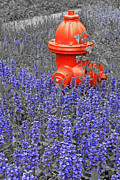 Illinois Flower Prints - IL0016 Fire Hydrant Print by Steve Sturgill