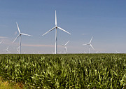 Cornfield Photos - Illinois Cornfield with Windmills by Richard Singleton