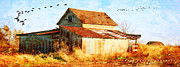 Illinois Barns Art - Illinois In November by P E Peterson