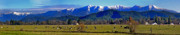 Panoramic Digital Art Originals - Illinois Valley cows  by David A Brown