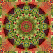 Sacred Geometry Art - Illumination by Bell And Todd
