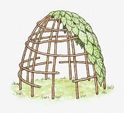 Man Made Structure Digital Art Prints - Illustration Of A Shelter In The Process Of Being Erected, Using Canes And Leaves Print by Dorling Kindersley