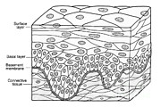 Squamous Prints - Illustration Of Stratified Squamous Print by Science Source
