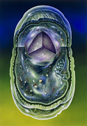 Microbiology Photos - Illustration Of Structures Of A Typical B by John Bavosi