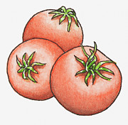 Pen Digital Art - Illustration Of Three Red Tomatoes by Dorling Kindersley