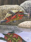 Turtle Paintings - Im Flying by Catherine G McElroy