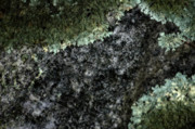Grays Digital Art - Im Lichen It by Ross Powell