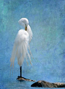 Egret Digital Art Posters - Im So Pretty Poster by Betty LaRue
