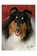Collie Digital Art Posters - Im Very Handsome Poster by Maxine Bochnia