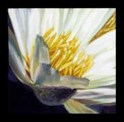 White Water Lily Posters - Image Number Five Poster by John Lautermilch
