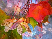 Seedpods Prints - Images of Fall Print by Beth Akerman