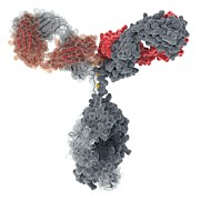 Proteomics Art - Immunoglobulin G Antibody Molecule by Visual Science