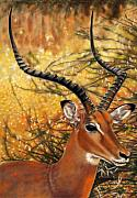 Children Pastels Posters - Impala At Sunset Poster by Carol McCarty