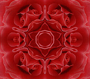 Spirituality Mixed Media Prints - Imperial Red Rose Mandala Print by Zeana Romanovna