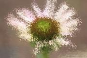 Deborah Benoit - Impressionistic Echinacea