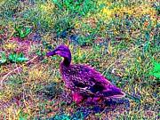 Impressionistic Mallard Duck Print by Annie Zeno