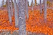 Kathleen Lake Photos - Impressionistic View Of Trees by Robert Postma