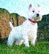 Impressionistic Oil Digital Art - Impressionistic Westie by Laura Brightwood