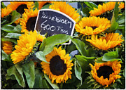 Amsterdam Market Posters - Impressions of Sunflowers Poster by Joan Carroll