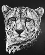 Cheetah Mixed Media Framed Prints - Impressive Framed Print by Barbara Keith