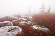 Fog Art - In a Fog - Dolly Sods West Virginia by Bill Swindaman