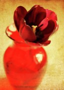 Tulips - In a vase by Cathie Tyler