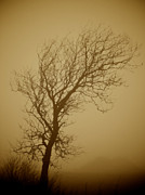 Lone Tree Prints - In Amber Print by Odd Jeppesen