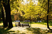 Park Benches Photos - In Autumn by Masha Batkova