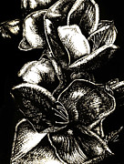 Wall Art Drawings - In Bloom    Black and Silver by Julie Ann Caldwell