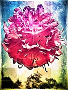 Mobilephotography Posters - In Bloom Poster by Jaclyn Dilling