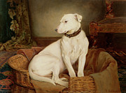 White Dog Framed Prints - In Disgrace Framed Print by William Woodhouse