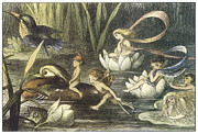 Fairies Framed Prints - In Fairyland Fairies and Waterlilies Framed Print by Richard Doyle