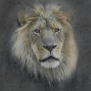 Lion Digital Art Framed Prints - In Memory of Elson Framed Print by Ernie Echols