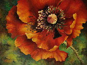 Poppy Drawings Prints - In Memory Print by Sherry Egger