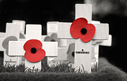 Remembrance Posters - In Remembrance Poster by Jane Rix