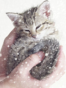 Cute Kitten Framed Prints - In Safe Hands II Framed Print by Amy Tyler