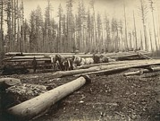 Lumber Prints - In The Cascade Mountains Near Seattle Print by Everett