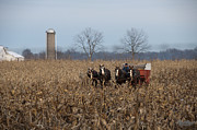 Amish Photos - In the Corn 2 by David Arment