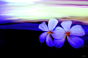 Flower Photographs Prints - In The Evening Print by Linda Sannuti