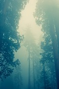 Huge Trees Posters - In the forest - cross processing Poster by Hideaki Sakurai