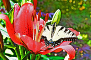 Susan Leggett Metal Prints - In the Garden Metal Print by Susan Leggett