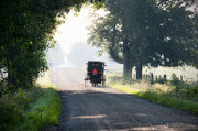 Amish Photos - In the Heat of the Day by David Arment
