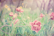 Flower Photographs Photo Prints - In the meadow Print by Toni Hopper