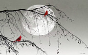Cardinals Prints - In The Misty Moonlight Print by Tom York