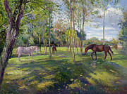 Grazing Horse Posters - In the Rectory Paddock Poster by Timothy Easton