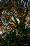 In The Shade Of A Florida Oak Print by Christopher Holmes