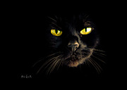 Animal Eyes Posters - In the shadows One Black Cat Poster by Bob Orsillo