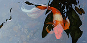 Koi Mixed Media Posters - In the Shadows Poster by Steve Goad